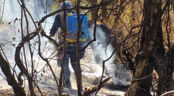 Personas que pretendían sacar miel provocaron el incendio en Itavicua