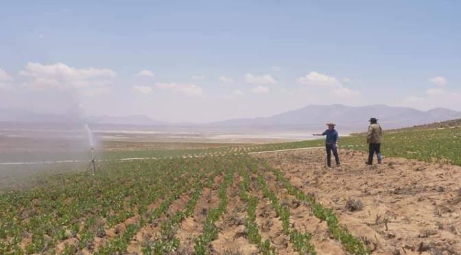 INIAF expondrá variedades de híbridos y material genético para semillas