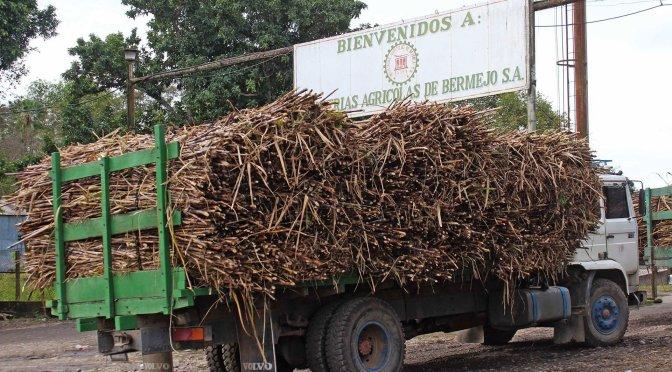 IABSA: Zafra azucarera 2020 será un fracaso