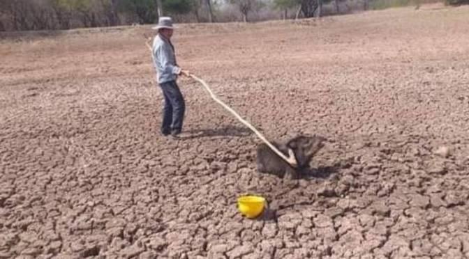 La sequía continúa azotando al Chaco a pesar de algunas lluvias