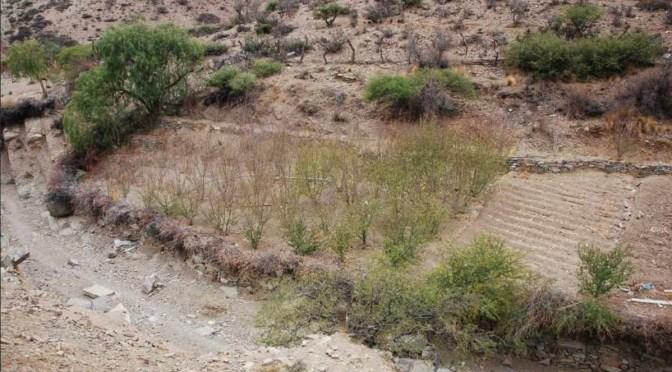 Sequía y granizadas afectan a algunas comunidades de El Puente