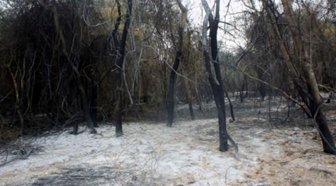 Disminuyen a nueve los incendios forestales activos en Bolivia