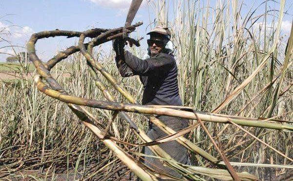 Cañeros anuncian bloqueos como medida de presión contra la industria azucarera
