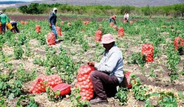 Productores de cebolla se reúnen la próxima semana con el ministro Characayo