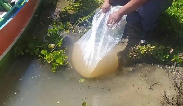 Gobernación inicia con la siembra de alevines en las principales represas de Tarija