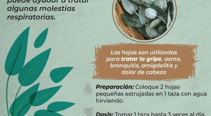 SALUD INICIA CAMPAÑA PARA ESTIMULAR EL USO DE LA MEDICINA TRADICIONAL PARA COMBATIR LA COVID-19