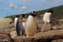 Riverbank Zoo 198_2_1