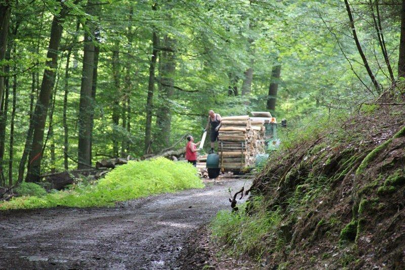 Ein Waldweg, ein Traktor, ein älteres Paar, das Holz auf den Anhänger lädt.