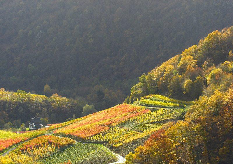 Ahrtal erleben - Nur für einen kurzen Moment taucht die Sonne die Weinberge in goldenes Licht