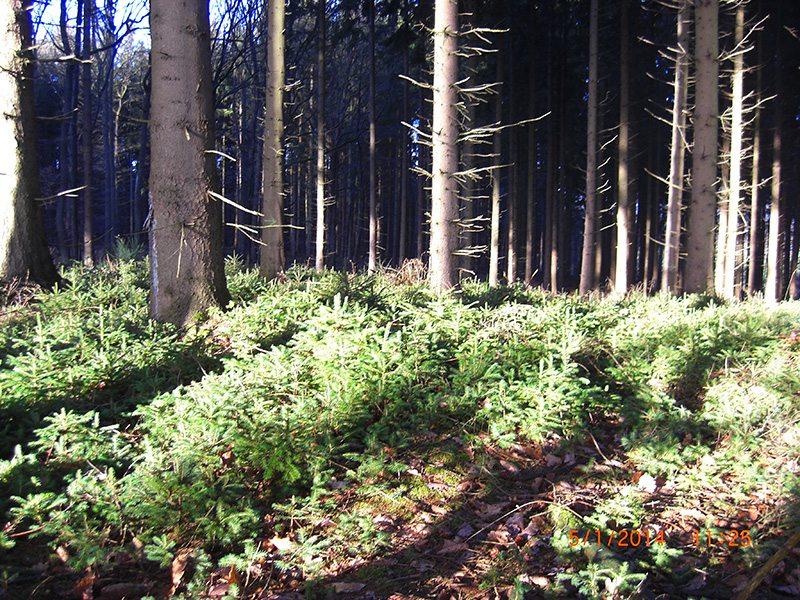 Wenn Wanderführer sich im Wald verlaufen