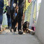 Hier steht ein Bild mit dem Titel: ... und noch viele andere Hunde auch (Foto: Britta Verhaag)