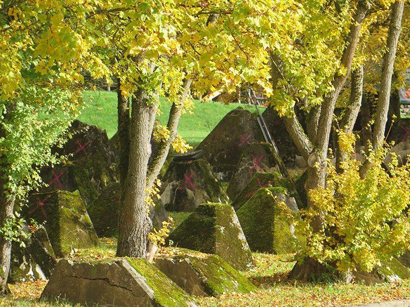 Hier steht ein Bild mit dem Titel: Walhausen – Reste vom Westwall (Foto: Hans-Joachim Schneider)