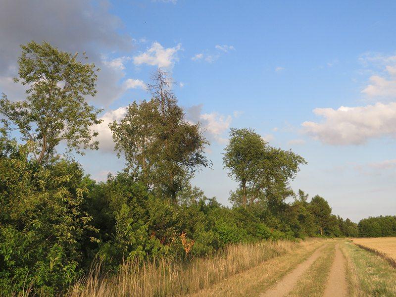 Nach dem Sonnenaufgang lieben Weg und Ackerflächen noch in aller Ruhe im Schein der Morgensonne (Foto: Hans-Joachim Schneider)