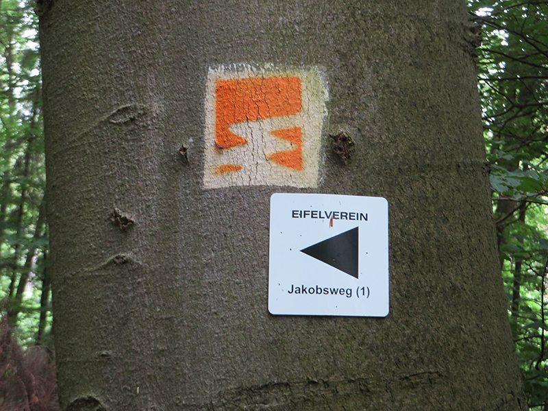 Die Markierungen für die Traumpfad-Vier-Berge-Tour an einem dicken Buchenstamm
