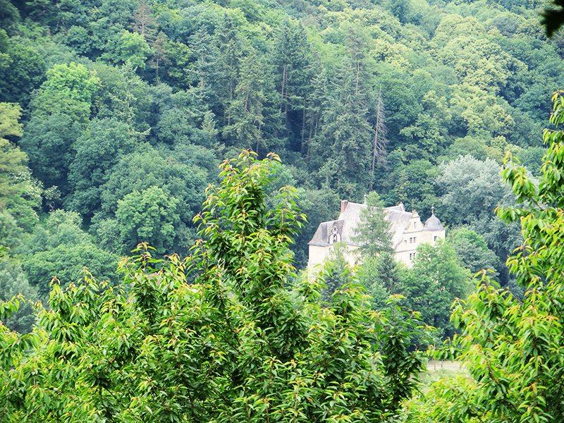 Fast nur die Dächer und Türmchen sind zu sehen von Schloss Schneppenburg (Foto: Hans-Joachim Schneider)