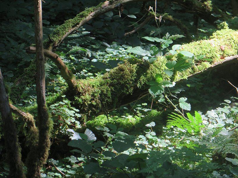 Das Grün der Bäume, Sträucher und Moose fasziniert mich immer wieder (Foto: Hans-Joachim Schneider)