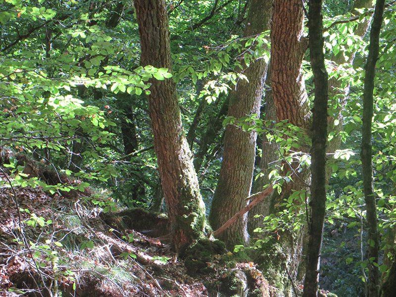 Licht und Schatten, dies gerade im Sommer im Wald so faszinierende Spiel im Tal der Wilden Endert nimmt mich auch hier gefangen (Foto: Hans-Joachim Schneider)