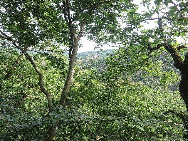 Beim Aufstieg auf der AhrSteig-Etappe 5 schimmert Burg Are durch das Grün der Bäume (Foto: Hans-Joachim Schneider)