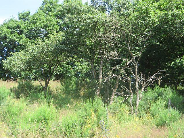 Die Wiesen auf der Hochfläche der Krähardt sind locker durchsetzt mit Bäumen und Gebüsch (Foto: Hans-Joachim Schneider)