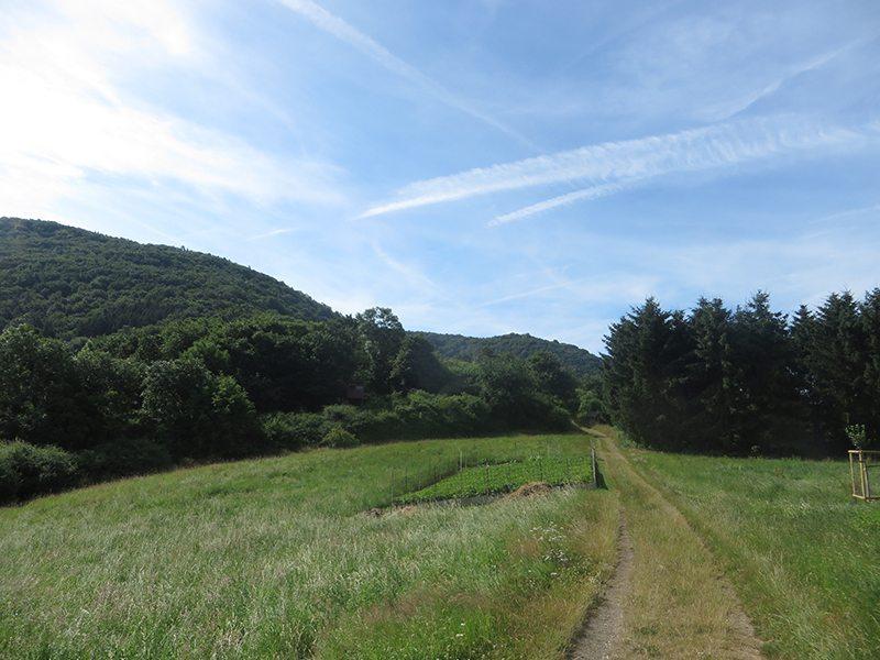 Wald, Wiesen, Wege am Lingenberg – Teil der neuen AhrSteig-Etappe 5 (Foto: Hans-Joachim Schneider)