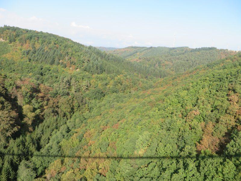 Als feiner Schattenriss zeichnet sich die Hängeseil-Brücke auf dem fast herbslichen Wald des Tales ab
