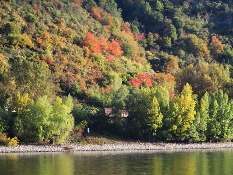 Eine Wohltat für das Auge: Die herbstlichen Farben am jenseitigen Rheinufer (Foto: Hans-Joachim Schneider)