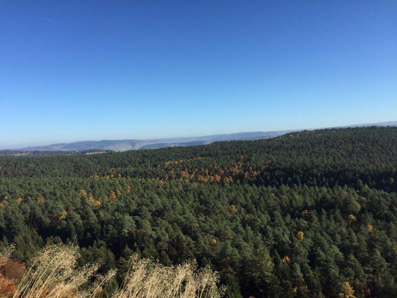 Der faszinierende Ausblick von der Hochburg über die weiten Wälder der Südeifel wird noch gekrönt durch einen strahlend blauen Himmel.