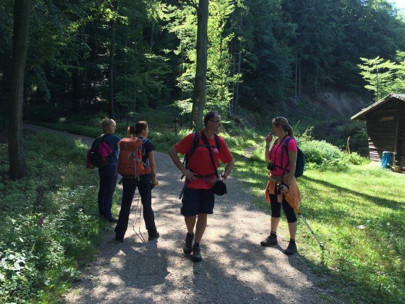 Das erste Mal wieder einen ordentlichen Waldweg unter den Füßen. Gleich steigt die Stimmung wieder.