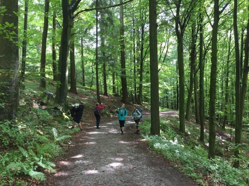 Wald, Buchenwald, Laubwald, Waldweg, Wrightsock-Team