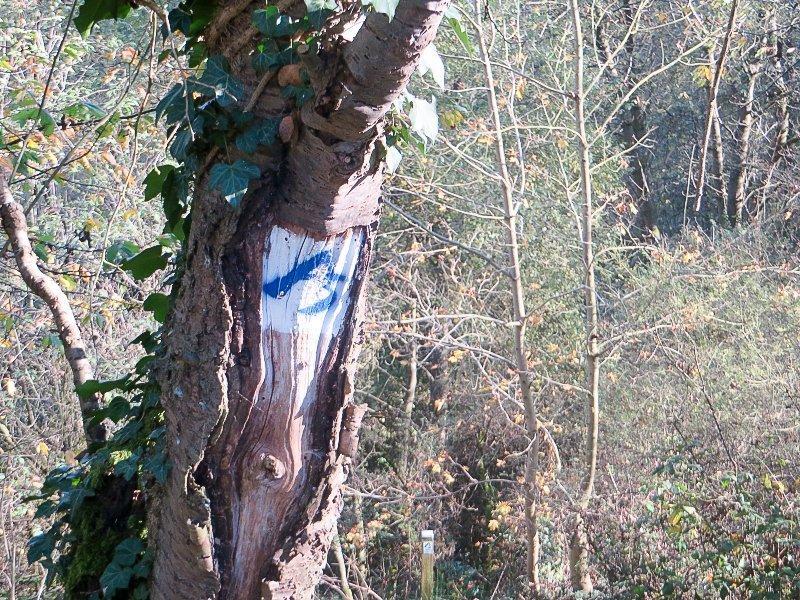 Baum, Bäume, Logo AhrSteig blau
