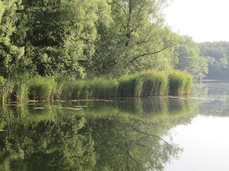 Wasser, Wald, Ufer, Angelplatz, grün, Schilf