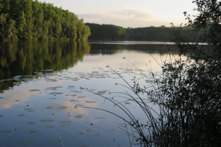 Wasser, Wald, Sonnenaufgang, Seerosen