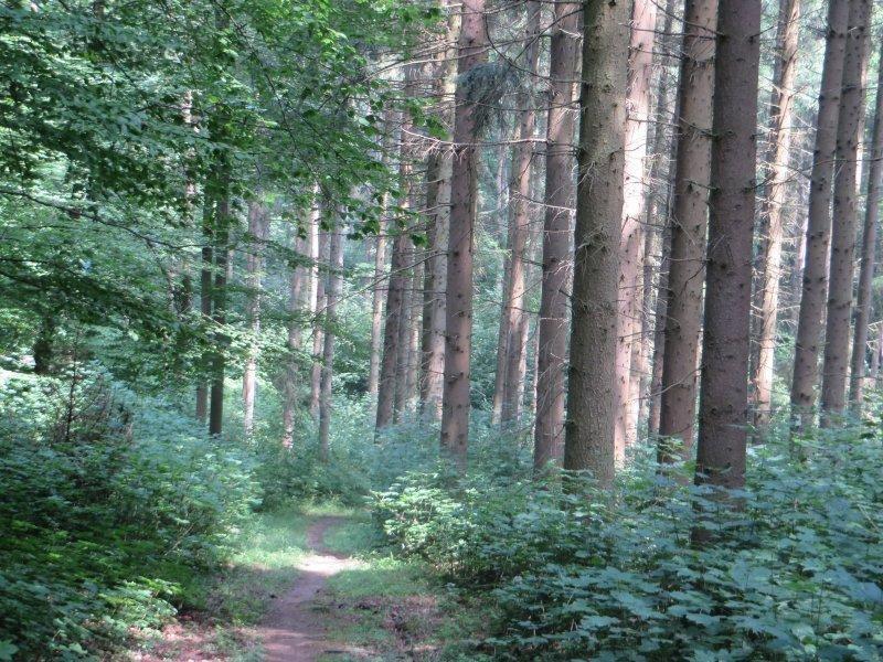 Wald, Sonne, Licht, Die Sonne zaubert Lichtstreifen auf den Rheinburgenweg