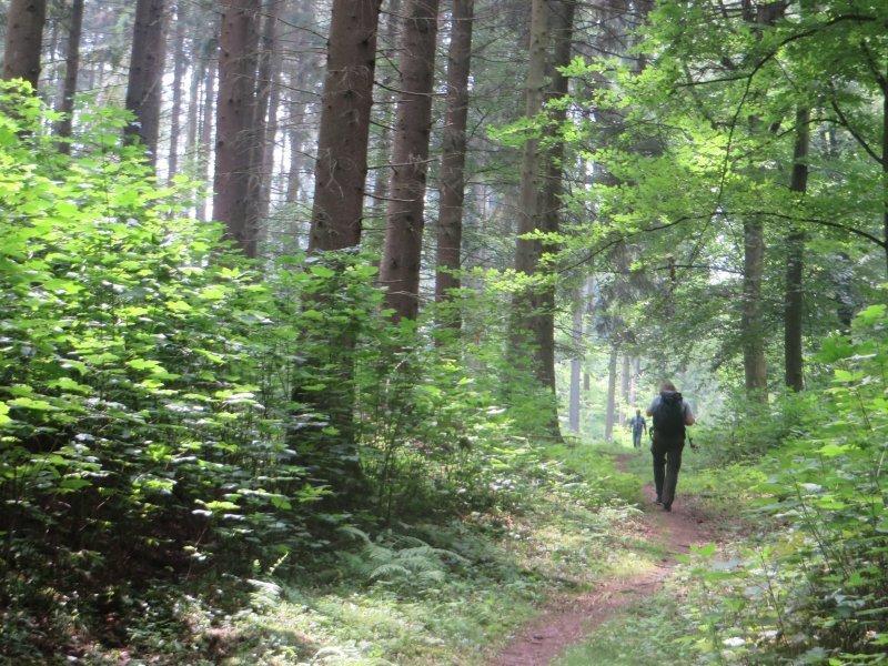 Wald, Wanderer, Buchenwald, Weg, Pfad, Lichtspiele, Nur vereinzelt treffen wir auf andere Wanderer