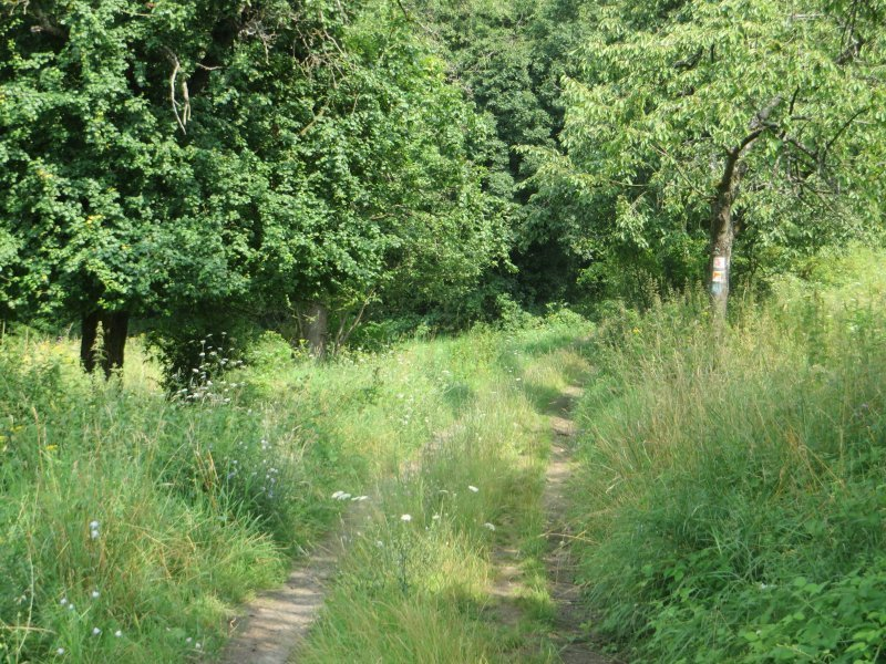 Gras, Weg, Wiese, üppiges Gras, Wald, Waldrand, Rheinburgenweg: Kaum haben wir die Landstraße überquert, geht es wieder hinein in den Wald