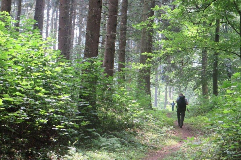 Wald, Weg, Wanderer auf dem Rheinburgenweg