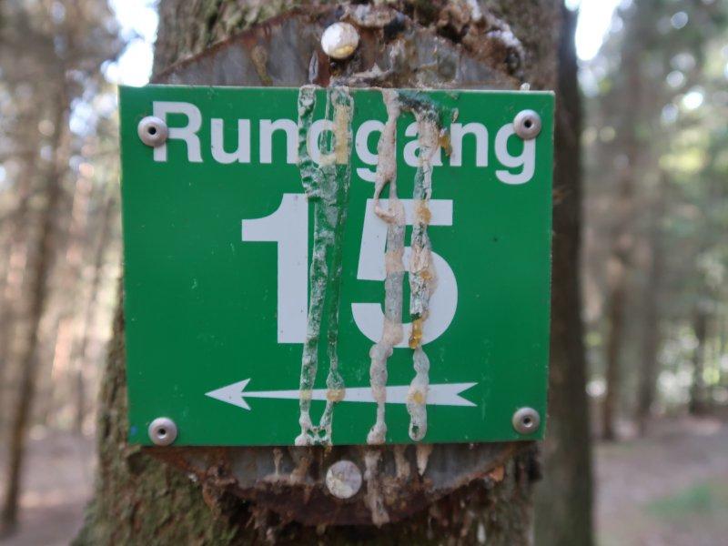 Baum, Schild, Markierung, grün, 15, Rundgang