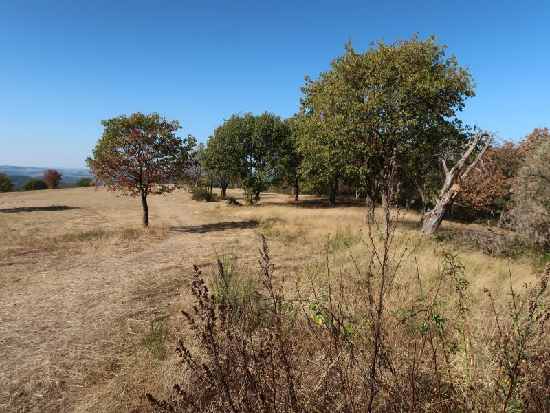 Kahle Wiesen, braungebranntes Gras, nur die paar Bäume tragen noch etwas Grün