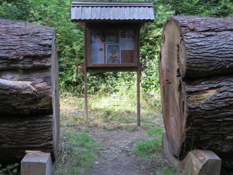 Ein mächtiger Koloss war dieser Baum schon zu Lebzeiten – die Dicke Eiche wurde von Naturgewalten gefällt (Foto: Hans-Joachim Schneider)