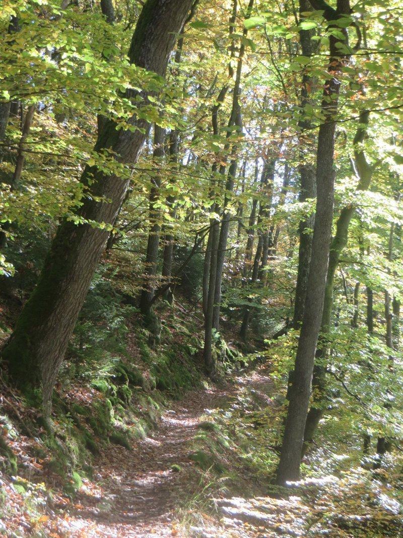 Wege wie der AhrSteig sind das, was der naturverbundene Wanderer sucht. Hier kann er Abenteuer im Ahrtal erleben