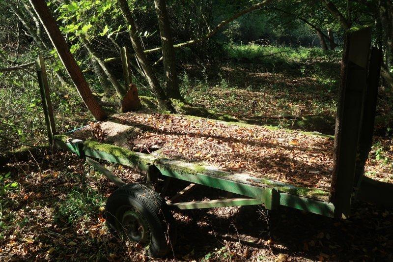 Eine alte rostige Karre, grüner Rahmen, im Zwielicht des Sommertages