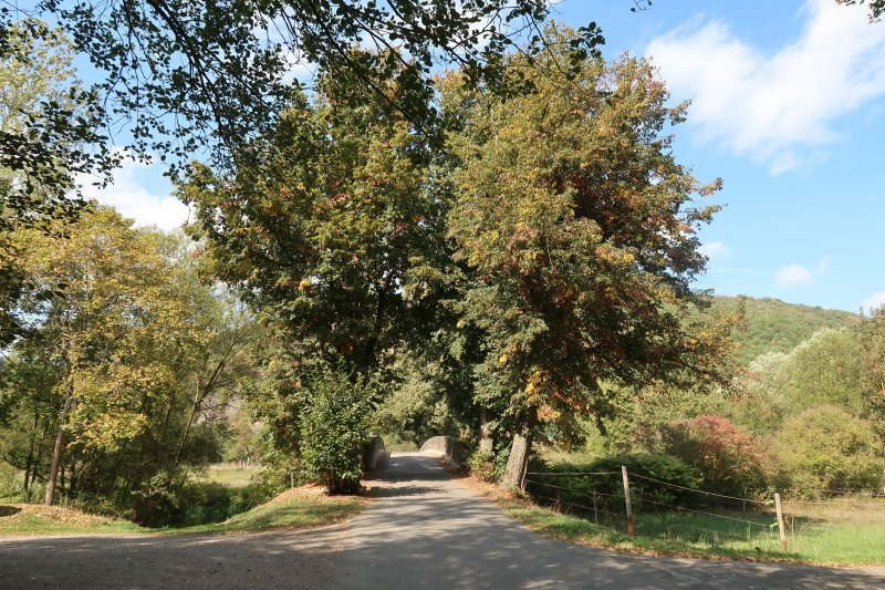 Ahrtal erleben auf mir noch unbekannten Wegen: Ahr. Bäume, Brücke, Übergang