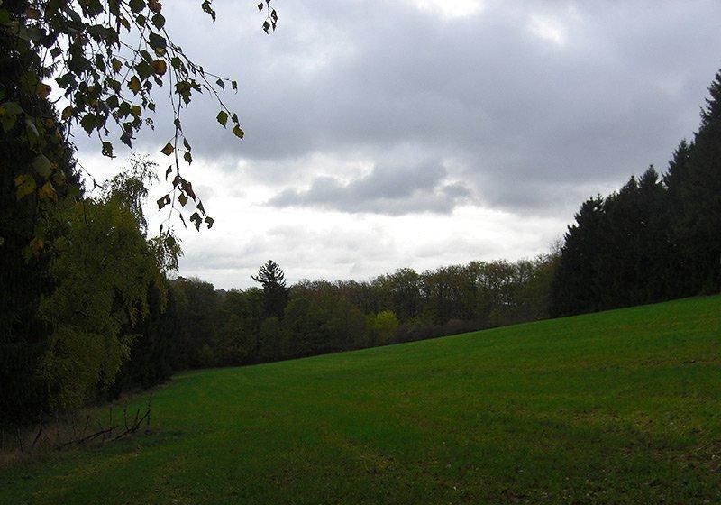 Eine Lichtung, ein grüner Acker, dunkle Bäume und darüber ein trüber Novemberhimmel