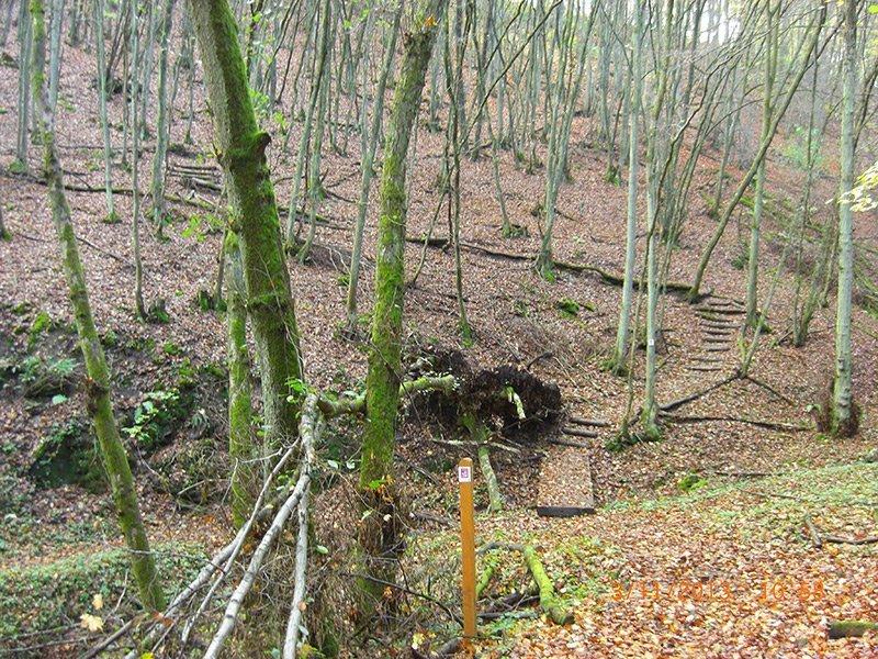 Ein lichter junger Laubwald, ein Anstieg über künstlich angelegte Stufen.