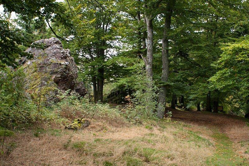 Grüne Eichen, mächtige Felsbrocken, mitten im Wald der alte Hexentanzplatz