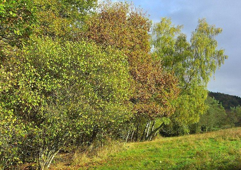 Am Waldrand junge Bäume und Büsche, manche noch grün, andere schon im Herbstkleid, darüber ein blauer HImmel