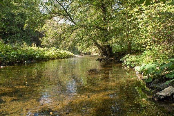 Als stiller Bach fließt der Hahnenbach unter den noch grünen Baumkronen dahin. Sonnenreflexe tanzen auf seiner Oberfläche