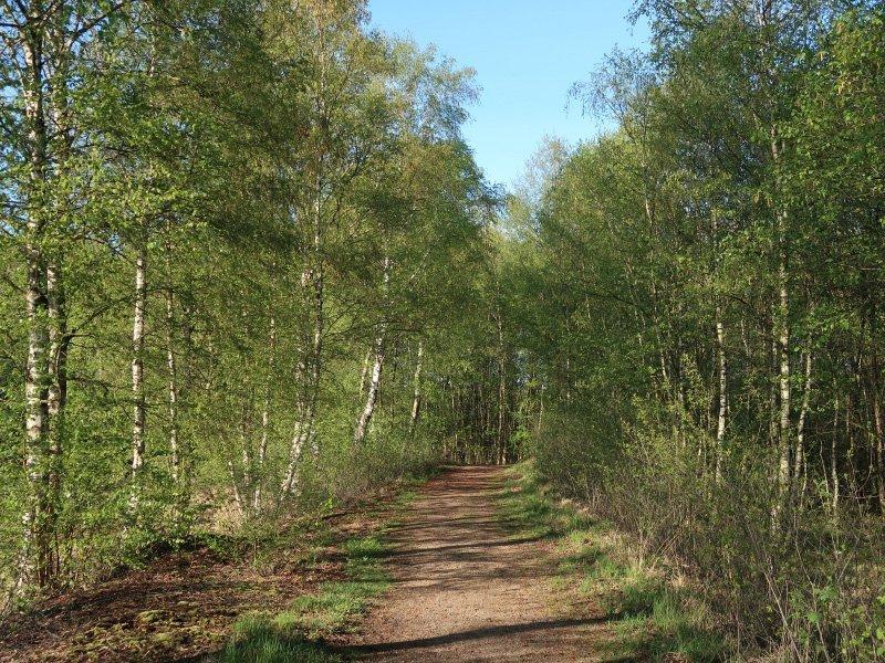 Die Bäume im jungen frischen Grün zieren den Weg ins Herz des Himmelmoores