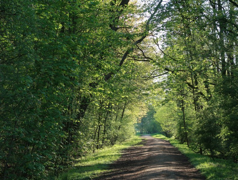 Braune Erde, grüne Bäume, junge Blätter
