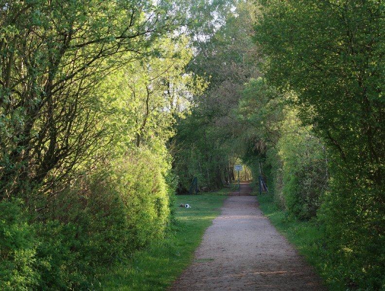 Wieder ein Weg, eine schnurgerade Allee, junges Grün linnks und rechts